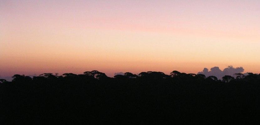 Guayacan Rainforest Reserve