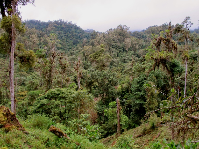 A view of the cloud forest up at the C.R.A.R.C. Rio Vereh Cloud Forest Reserve.