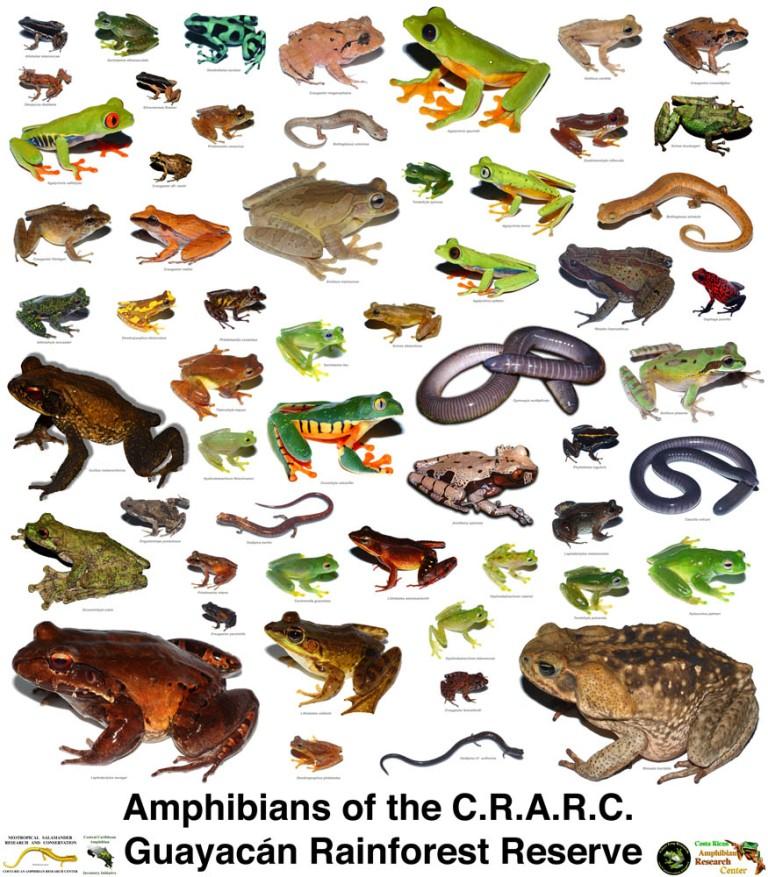 Amphibians amphibian sample