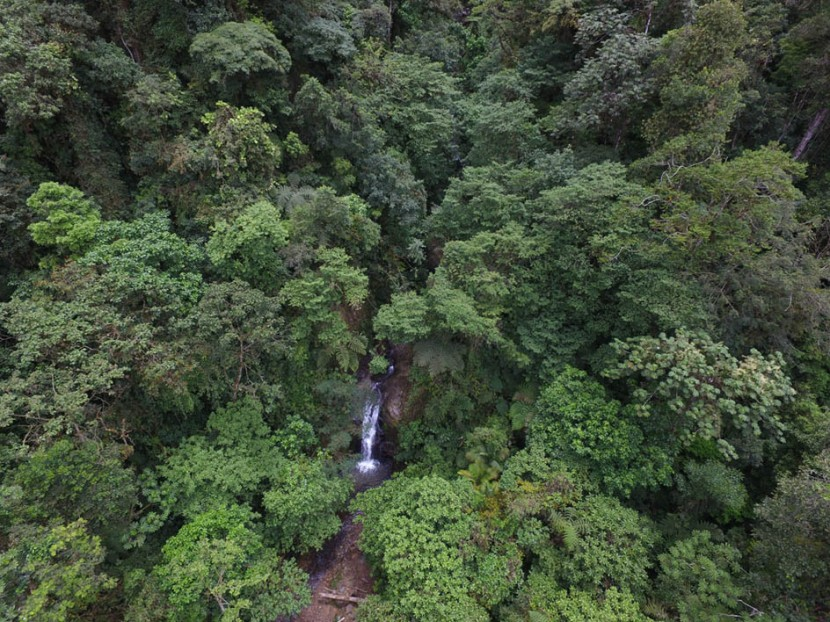 The Río Vereh Cloud Forest Reserve